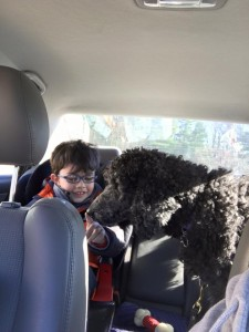 A little boy in glasses and a winter coat sitting in a car while a black poodle sniffs his finger