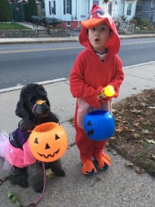 little boy as a red angry bird, salt and pepper poodle as a pink angry bird