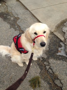 service dog on leash