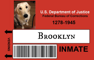 a prison ID with the image of a golden retriever looking alertly at the camera and her name BROOKLYN noted as the inmate in question